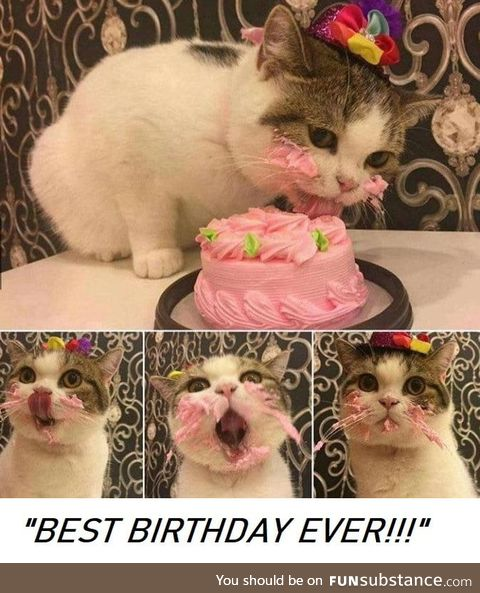 Happy birthday kitty!