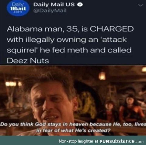 Pocket squirrel