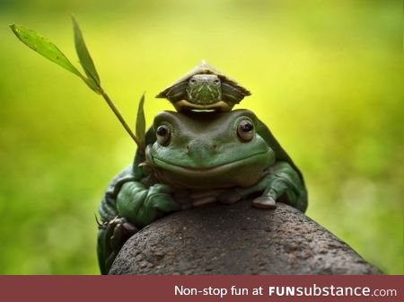 "Froggo Fun #20 - ""If ye wish to scroll further, ye must answer me these questions three"""