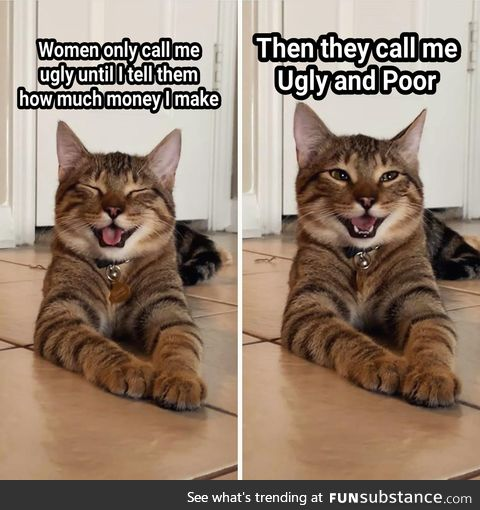 Who's laughing meow?