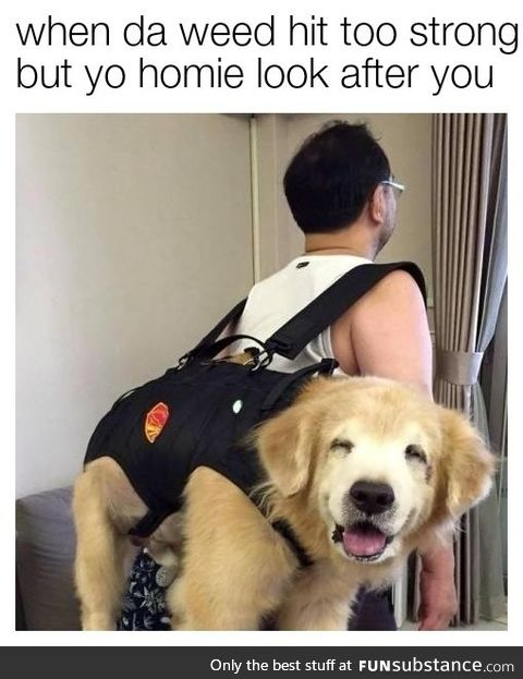 Always travel with your trip sitter