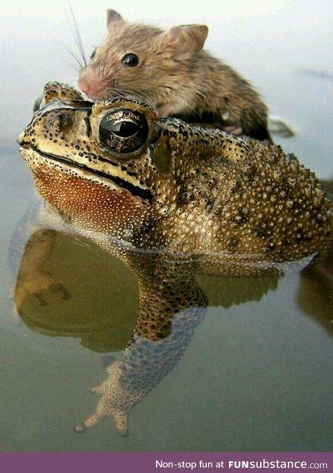 Froggo Fun #25 - Froggo Save Soaked Squeak-Squeak
