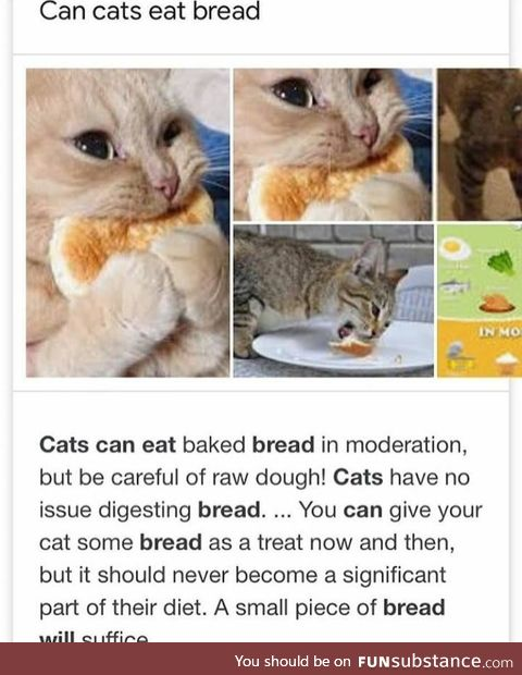 Cat's can eat a few pancakes