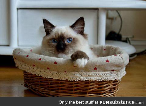 Happy caturday (also 100th post)
