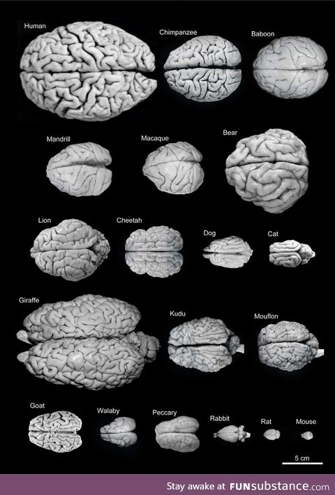 The brain is the powerhouse of the body
