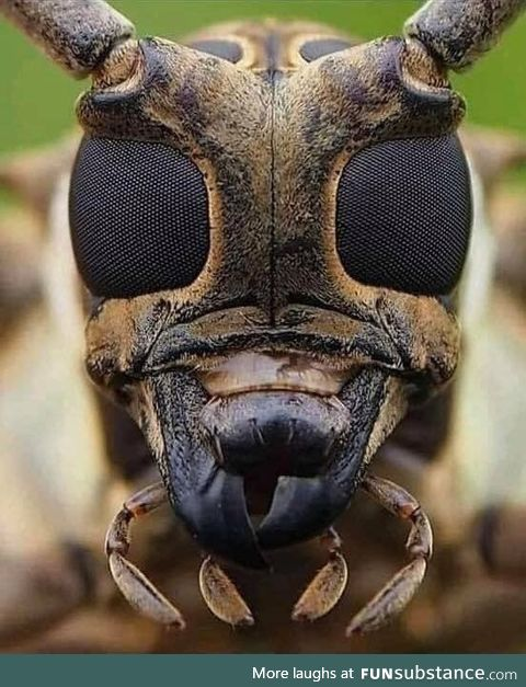 Photograph of the face of a bee taken with a high resolution camera