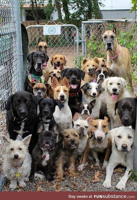 Possibly the best picture ever taken of a dog daycare.