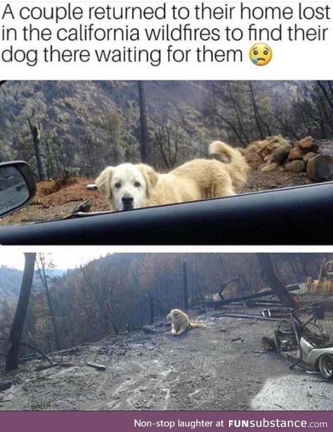 Poor doggo