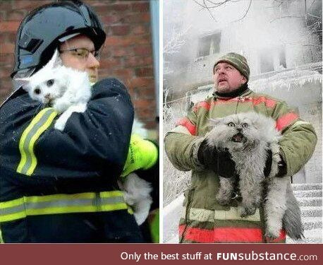 Cat from Denmark vs. Cat from Russia after being saved from a fire
