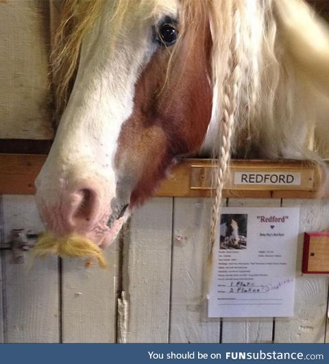 There is a horse that grows natural facial hair :)