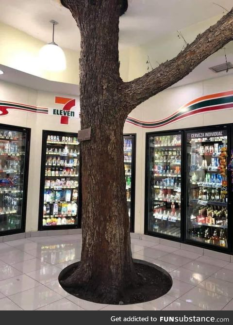 This 711 in Mexico was built around a tree
