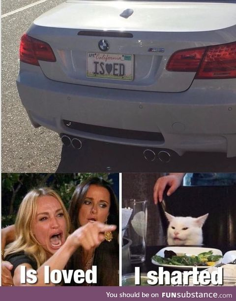 Why is that cat sitting at the table