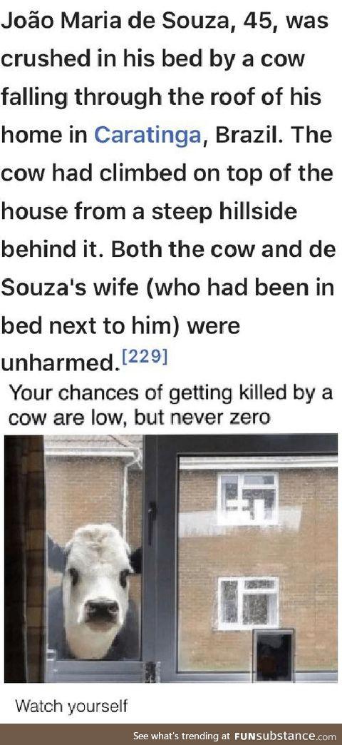 When do cows get their own week?