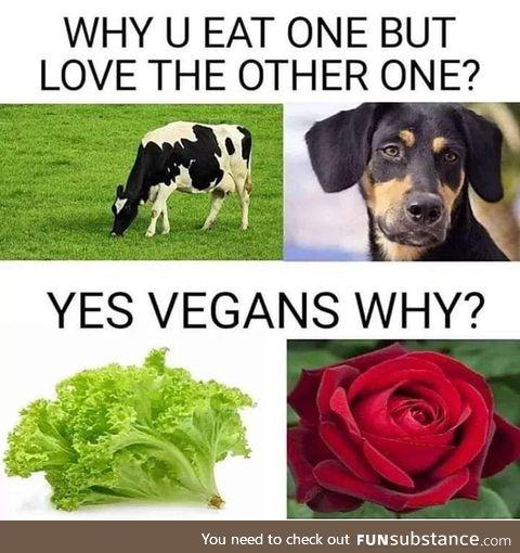 Lettuce life matters
