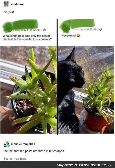Pets can be pests, too