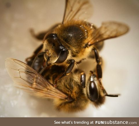 Since we're posting pics we've taken of honeybees I thought I'd add mine too!