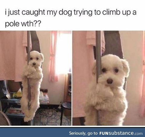 Sexy doggo