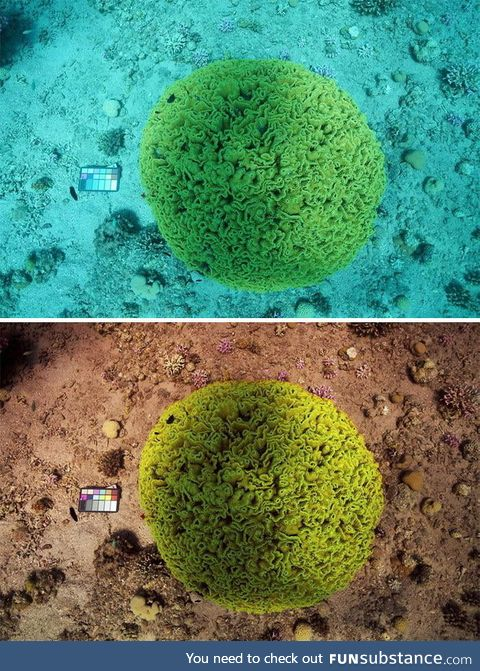 Two scientists created the 'Sea-thru' algorithm that alters underwater photos