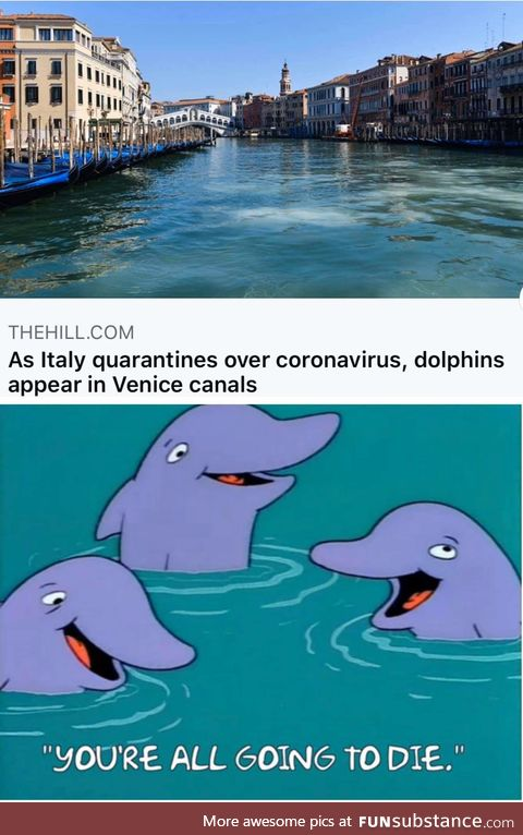 *dolphin laugh*