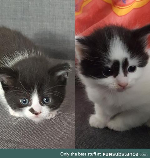 These are my kittens, Oreo and Crumbs!
