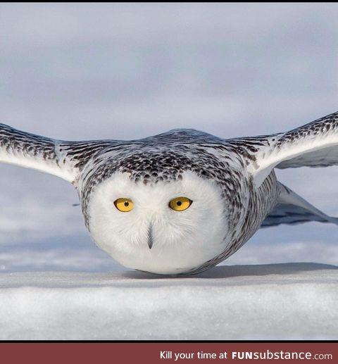 Owli enjoy belly rubs, also