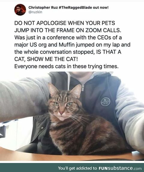 Don't apologize for pets