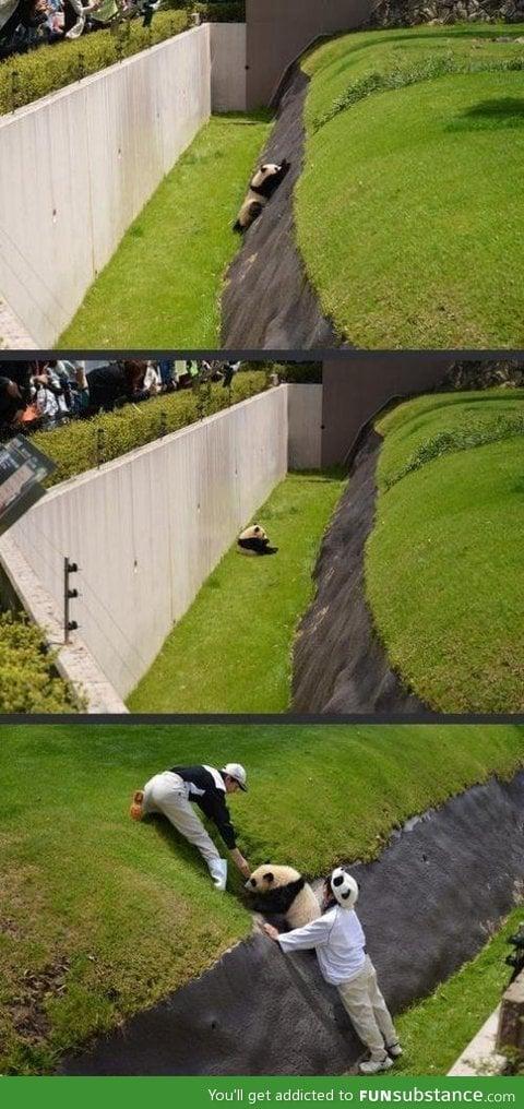 Panda gets a hand