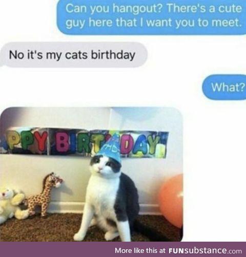 Birthday cat!!!