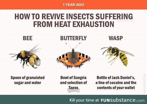 Those pesky waspsps