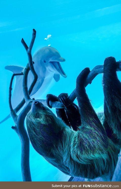 Texas aquarium shows a sloth to the dolphins