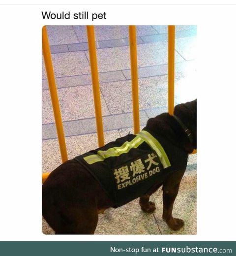 11/10 would pet