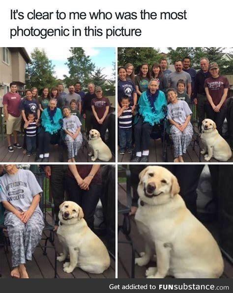 Most photogenic doggo