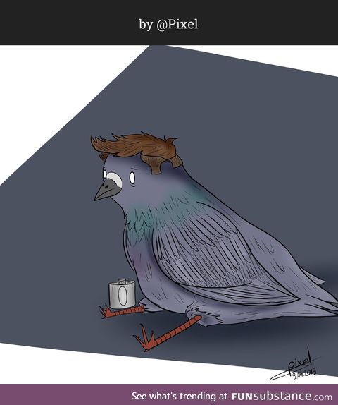 Sitting Pigeon