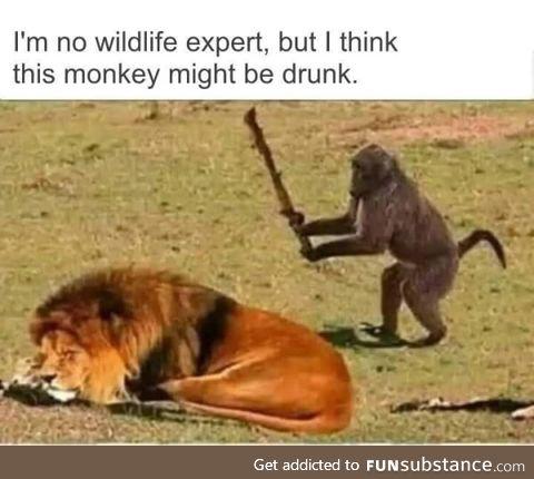 *monkey speak* It's just a prank bro!