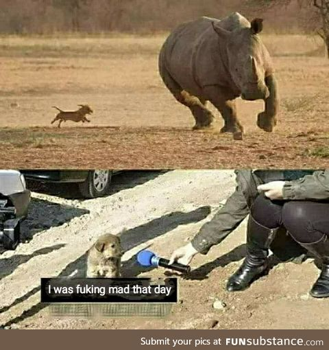 Such a brave dog