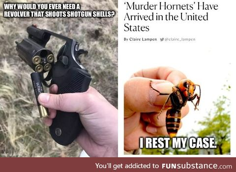 Murder Hornets, you say?
