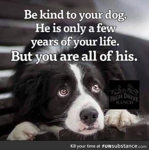 Be kind to your dog