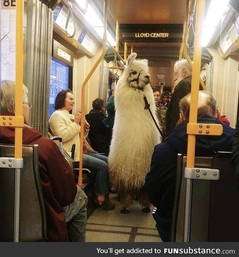 Subway Llama doesn't want no ddrama
