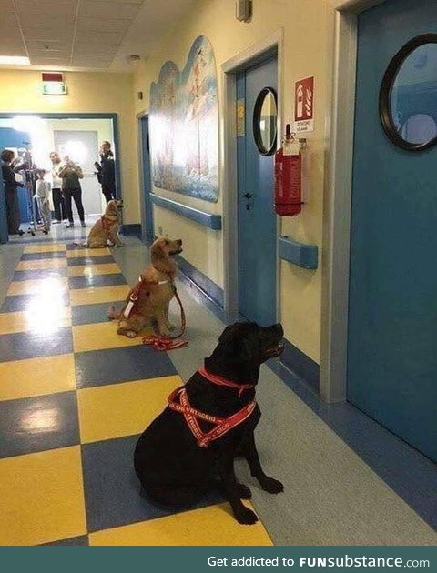 Here's a pic to make you smile today ; Doggoes waiting to go into sick children