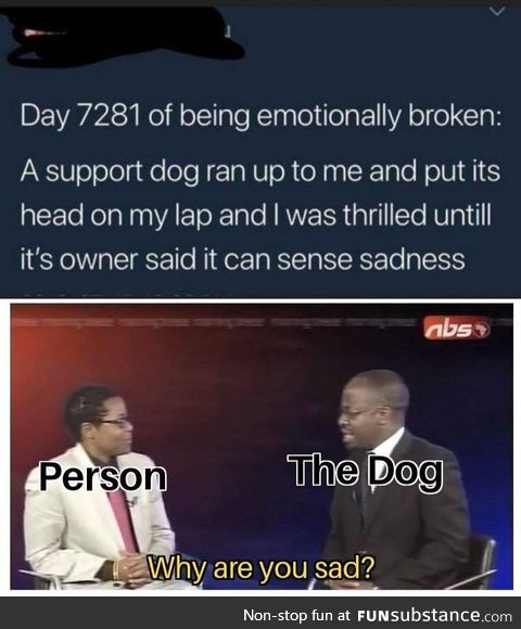 Doggo of sadness