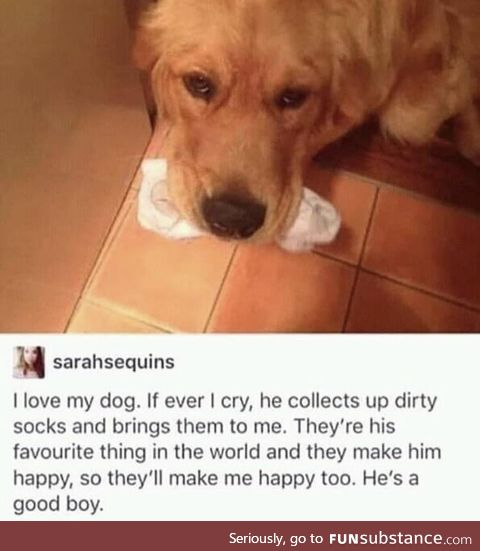Proof that dogs are the greatest animal ever