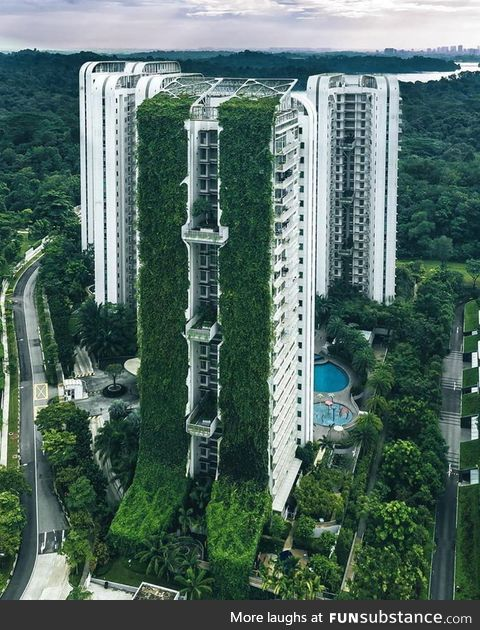Some Singapore buildings are plant covered which help them to cool down the neighboring