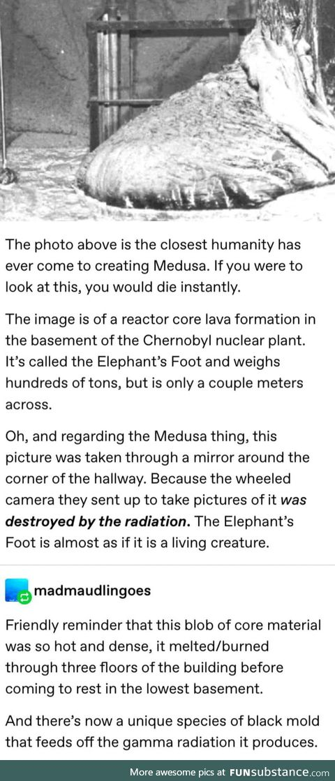 Great another thing we can't kill with radiation