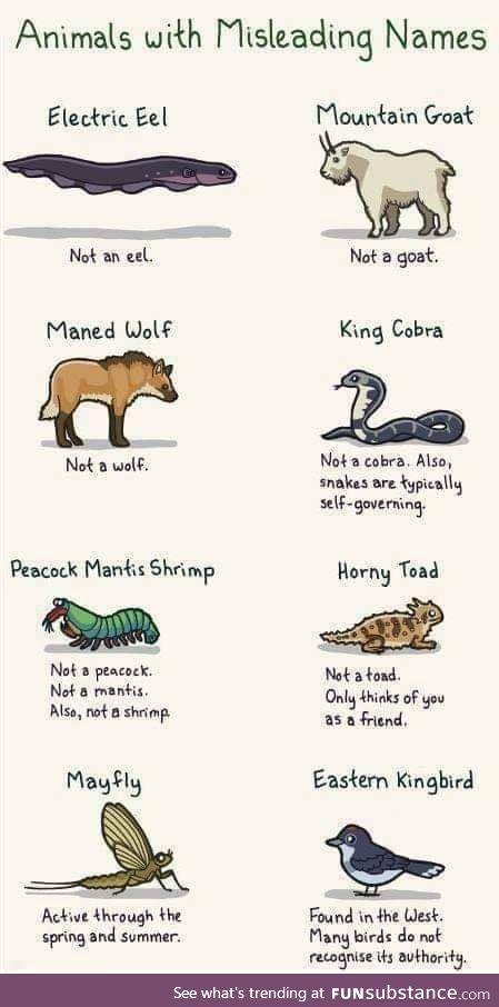 Animals, deciphered