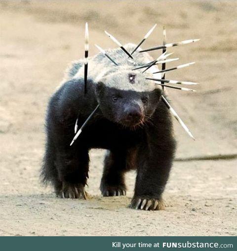 Honey badger doesn't care