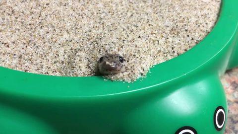 Snek hides in sand