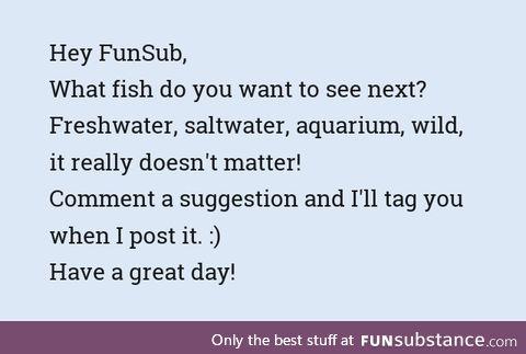 Fishy Fun Requests