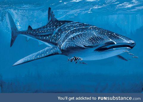 Fishy Fun Day #17: Whale Shark @SuperDave