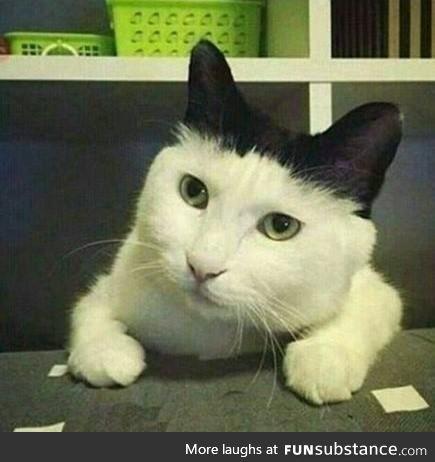 Loading white cat: 90%