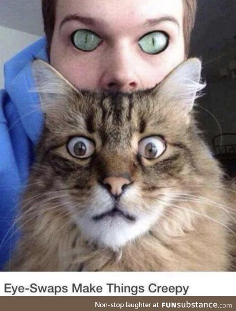 If we had cat eyes and they had human eyes... Scary